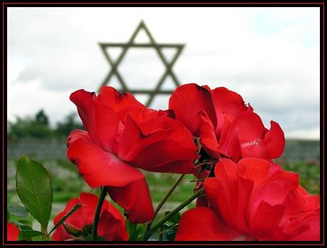 Hřbitovní růže